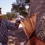 Cork-Harvesting