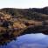 The Portuguese Montado (Cork Oak Forest)