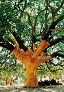 Whistler Tree