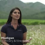 st-francis-winery-video